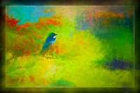 Magpie and Colours
